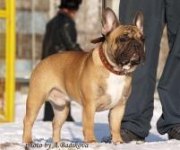 Лучшая собака клуба-2011 (10.12.2012)